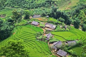 Natural beauty - Vietnam rice fields houses.jpg